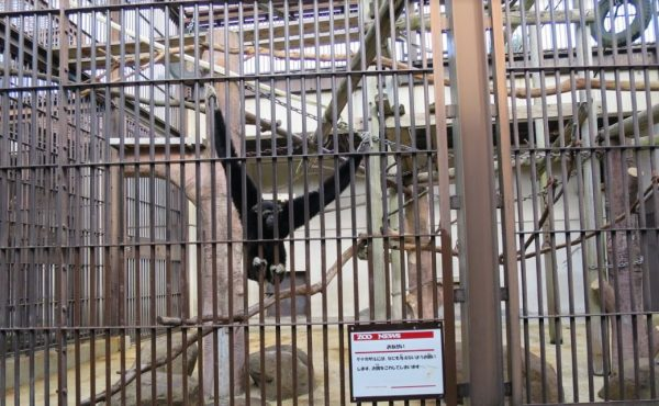 砥部の動物園(モンキータウン)