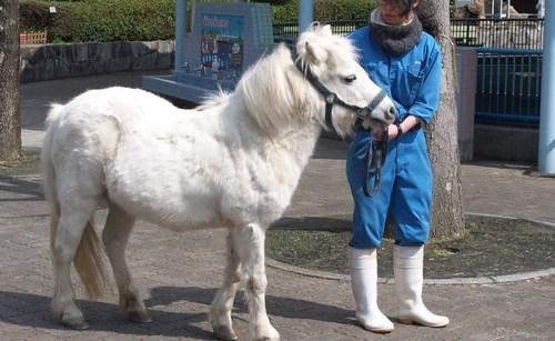 ポニーのエサやり乗馬体験