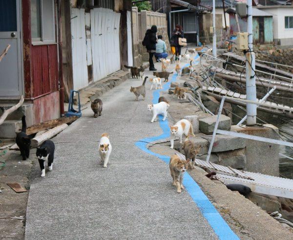 たくさんのネコ