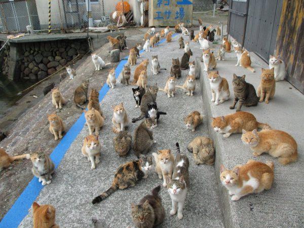 ネコの群れ