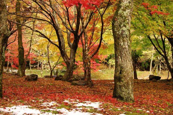 滑床渓谷 紅葉
