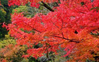 石鎚スカイライン 紅葉