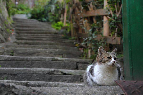猫の細道 尾道