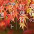 紅葉狩り 愛媛