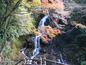 大洲白滝公園 紅葉