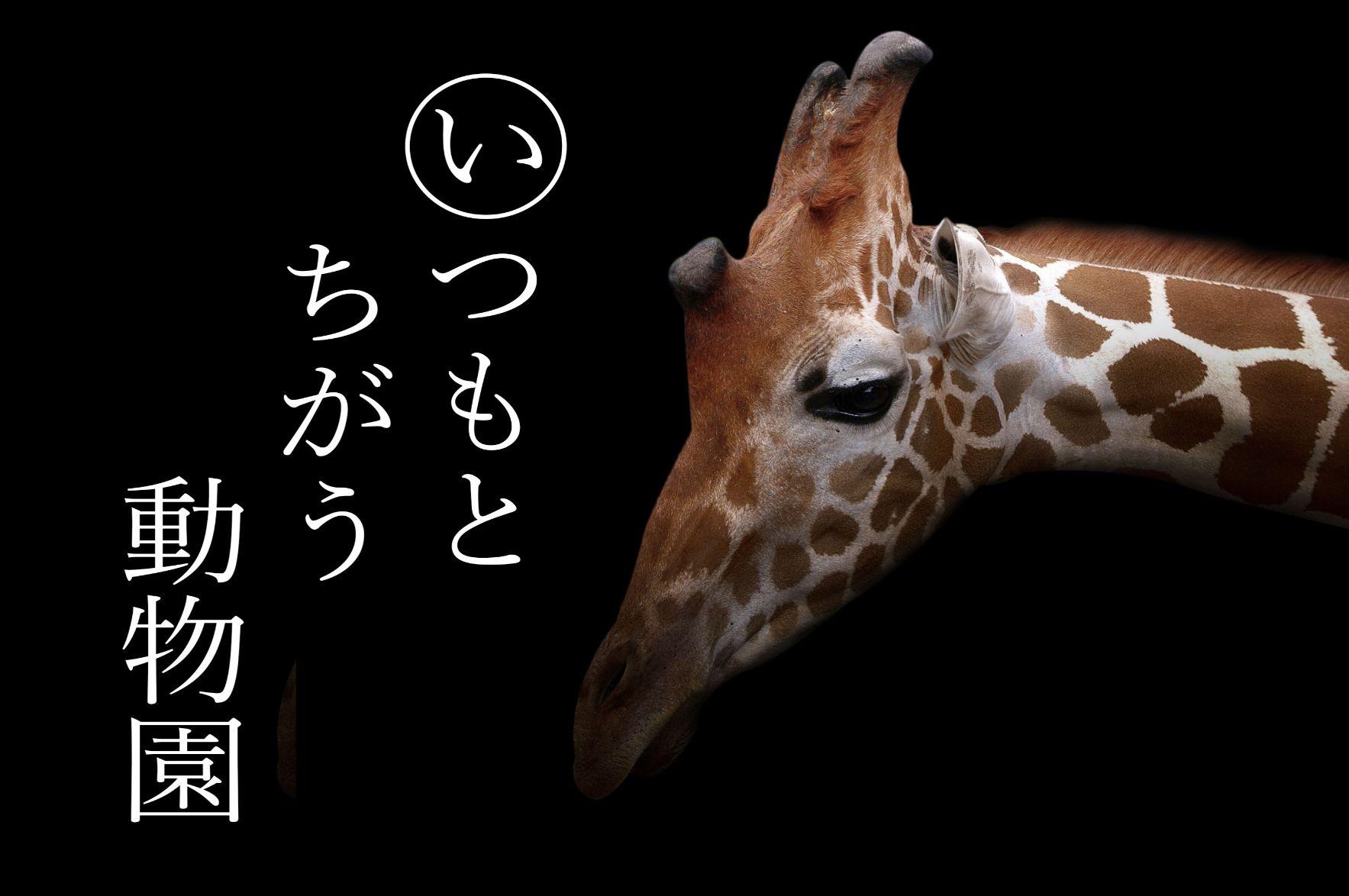 とべ 夜の動物園