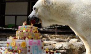 とべzooのピース誕生日会