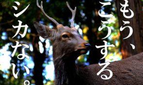 鹿-譲渡-愛媛